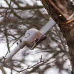 9 Best Cordless Pole Saws