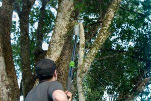 best electric pole saw