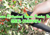 Bastex Professional Bypass Pruning Shear Review in 2021