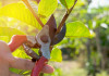 What Are Secateurs Used For: Facts You Need to Know