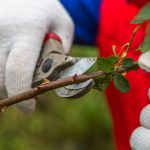 What Are Bypass Pruners & What Is the Best Way to Use Them?