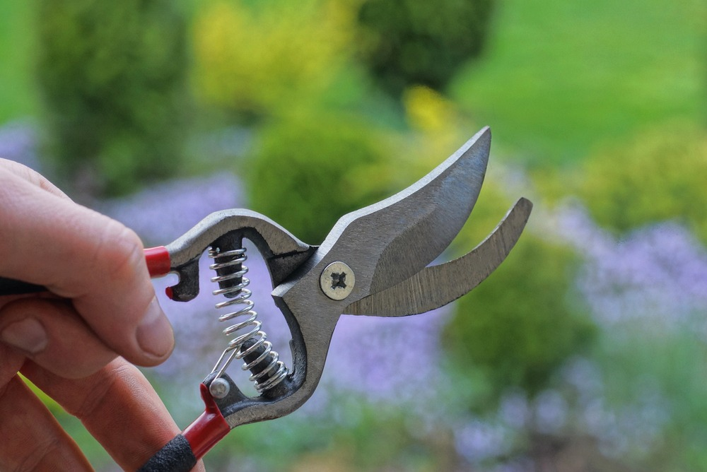 How to Sharpen Pruners with a Dremel: A Step-By-Step Guide