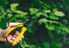 What Are Secateurs: A Guide for Users and Buyers