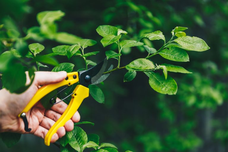 what are secateurs