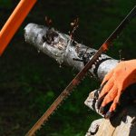 10 Best Bow Saws for Woodworking