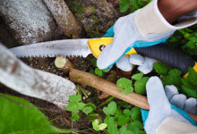 10 Best Pruning Saws in 2021