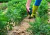 10 Best Soil Moisture Meters in 2021