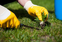 10 Best Weed Removers & Pullers in 2021