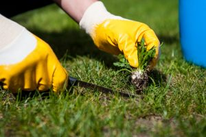 best weed remover puller