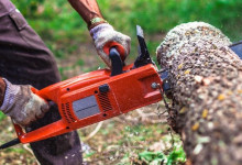 10 Best Electric Chainsaws in 2021