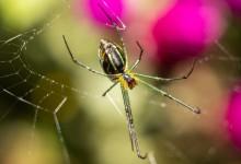 10 Best Spider Killers in 2021