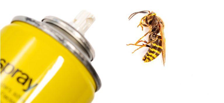 best wasp spray