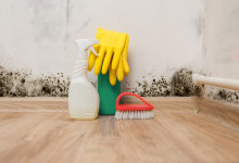 10 Best Mold Removers in 2021